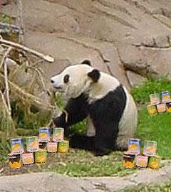 Panda Wu, Revered Revolutionary Leader of the Panda's Republic of Panda